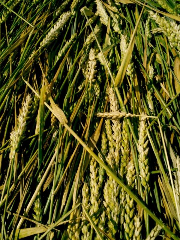 kruh boskovice 2