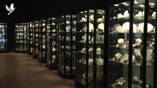 MGM Minerals, Výstava minerálů