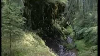 Za tajemstvím šumavských lesů