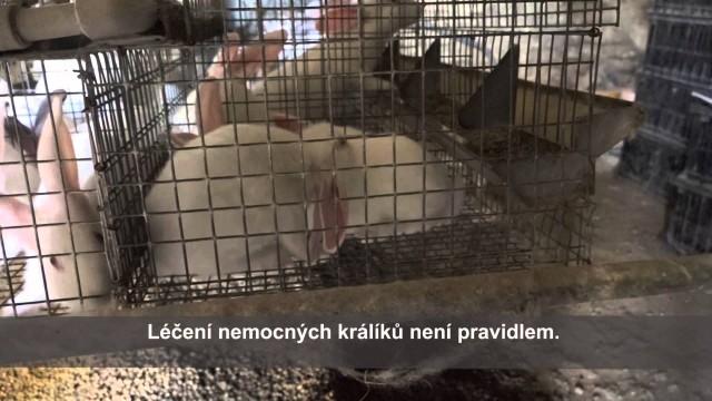 """Iva Pazderková: """"Přemýšlejme, odkud se bere maso na našem talíři."""""""