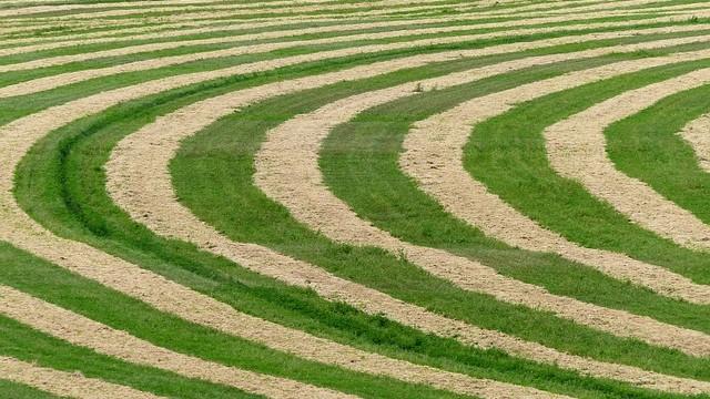 Záhadné kruhy v obilí