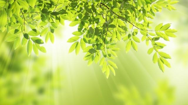 http://cestyksobe.cz/wp-content/uploads/2015/04/Evoluce-svit-slunce-skrze-v%C4%9Btve-strom%C5%AF-na-%C5%A1%C3%AD%C5%99ku-640x360.jpg