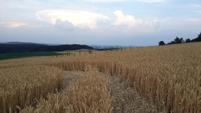 Kruhy v obilí na Jihlavsku