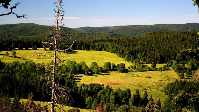Poslanci budou hlasovat o národních parcích – napište jim, ať podpoří divočinu!