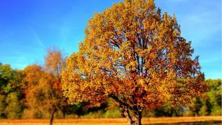 Stromy nám nabízejí sílu, lásku i zdraví