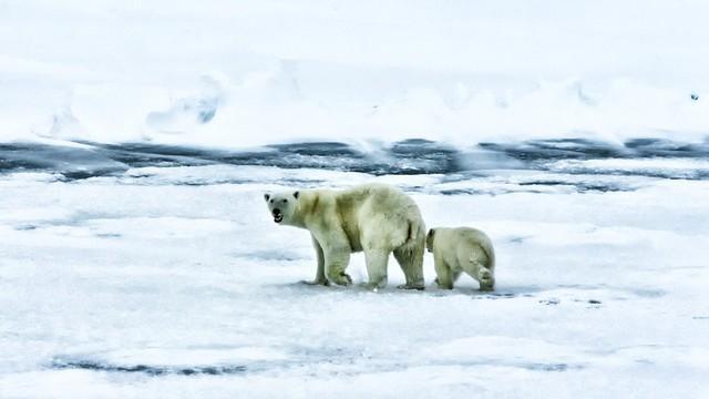 Dokázali jsme to! Shell končí v Arktidě!