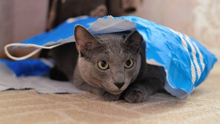 Kočičí útulek, který potřebuje zoufale vaši pomoc: Jsme na pokraji, kapacitně i finančně!