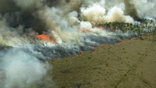 Hoří!, pomozte chránit domov orangutanů!