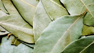 Objav ruského vedca: Spáľte list tejto bylinky a váš stres razom zmizne
