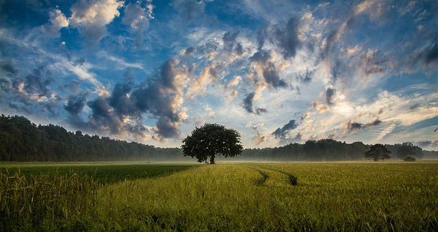Pomoc Bohyni Matce a kvetoucím stromům