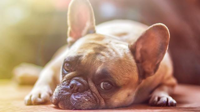 Otřesné záběry z psích množíren. Na co si dát pozor u inzerátů?