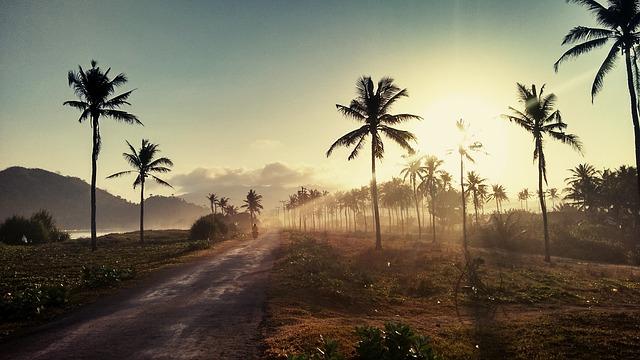 """ODHALENO: Kdo používá """"špatný"""" palmový olej"""