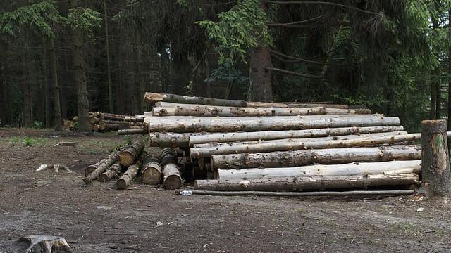 PETÍCIA – Za okamžité zastavenie výrubov stromov na celom Slovensku