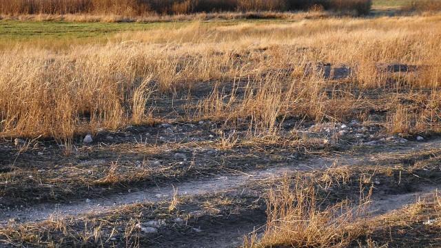 MŽP v boji se suchem