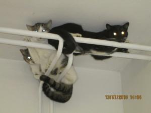 Ustrašené na rourách u stropu