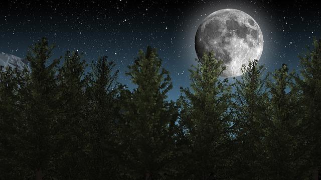 Fascinující zjištění: Stromy v noci vykazují známky spánku