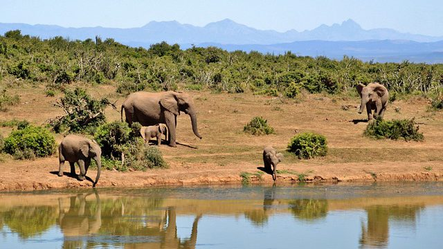 Počet zvířat v přírodě na Zemi rychle klesá, mezi lety 1970 a 2012 jsme přišli o 58 procent zvířat