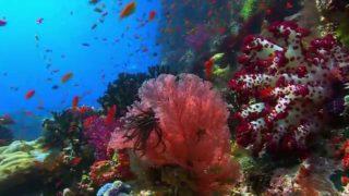 Příroda promlouvá – Ian Somerhalder jako Korálový útes