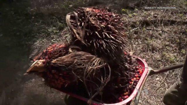 Palmový olej vyrábějí v Indonésii děti. Nevěděli jsme to, brání se odběratelské firmy