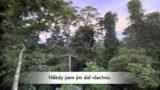 PRALES – Kevin Spacey mluví za pralesy
