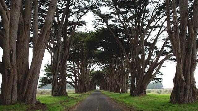 Zachraňme stromy! Podepište petici na ochranu stromů a alejí