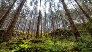 Senát navrhuje zničit české národní parky. Zachraňme je!