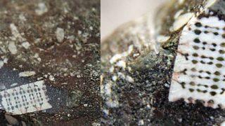 V Rusku se našel 250 milionů let starý mikročip