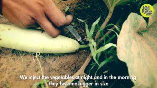 Velký zeleninový podvod