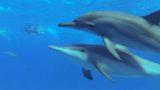 Poselství delfínů