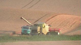 Agrosymboly – Kruhy v obilí