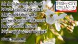 Jak slavili jarní oslavy rovnodennosti naši předkové Slované?