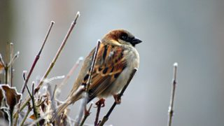Do 2. května – řekněte Stop úbytku polních ptáků !