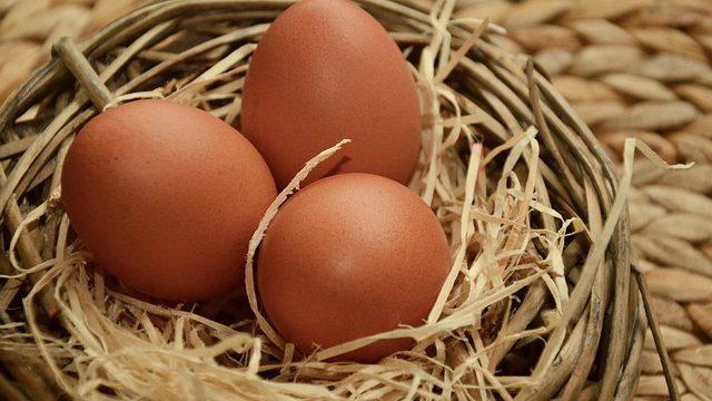 Slepice, nebo vejce? Vědci možná zjistili, co bylo první